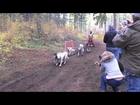 NW Dryland Sled Dog Championships
