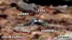 Mars.anomalies.Discovery . Duck . Lizard .NASA Curiosity,